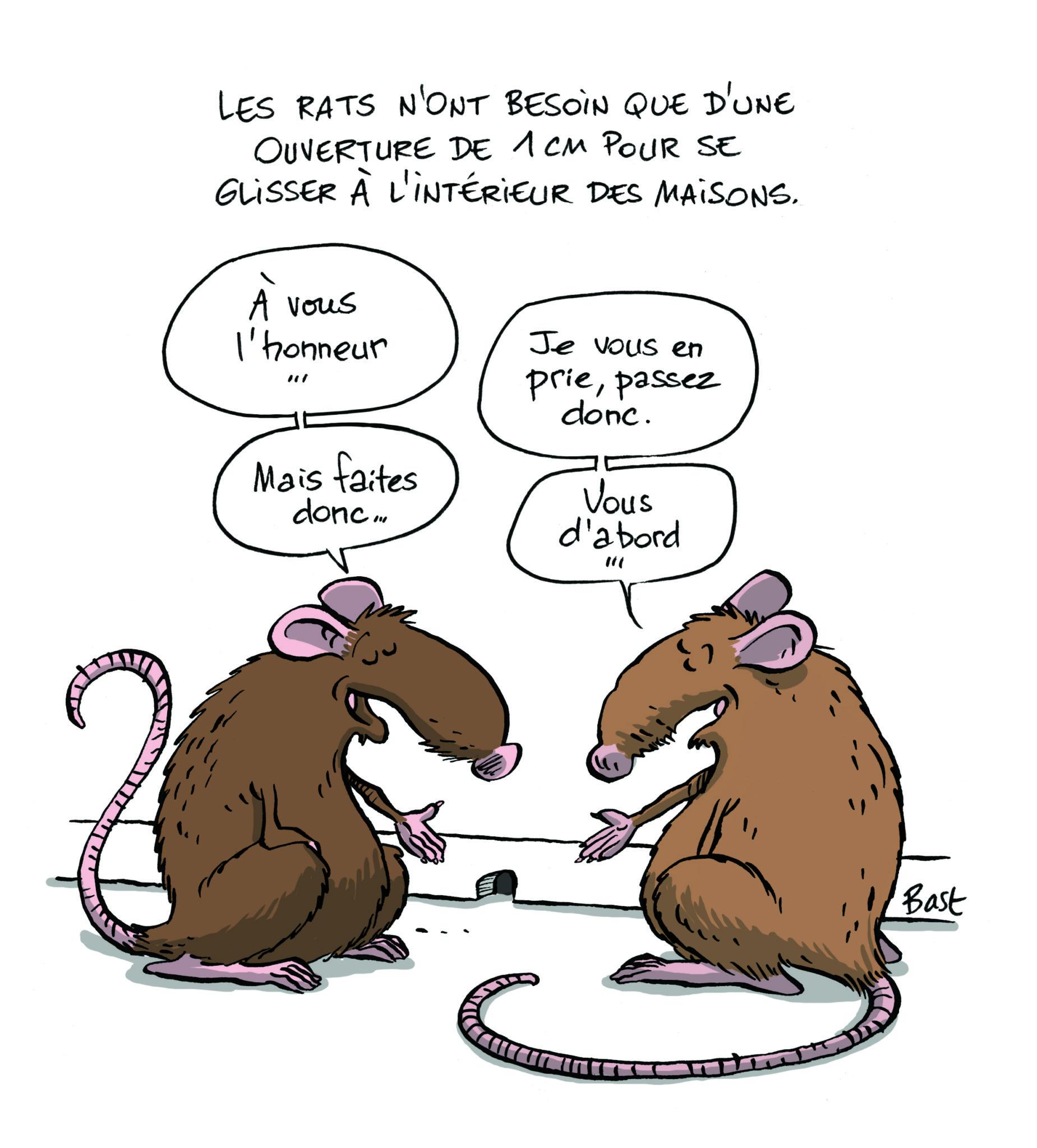 Souris et rat taupier sur la france - Faire fuir les rats ...