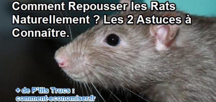 comment tuer des rats naturellement taupier sur la france. Black Bedroom Furniture Sets. Home Design Ideas