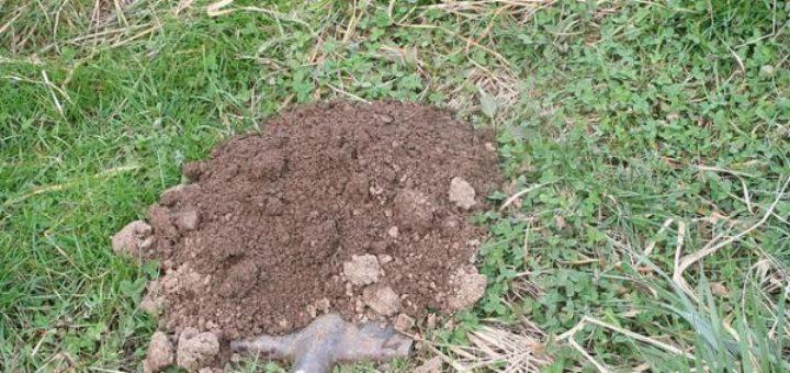 Comment liminer les taupes de son jardin taupier sur la - Comment eliminer des fourmis dans le jardin ...
