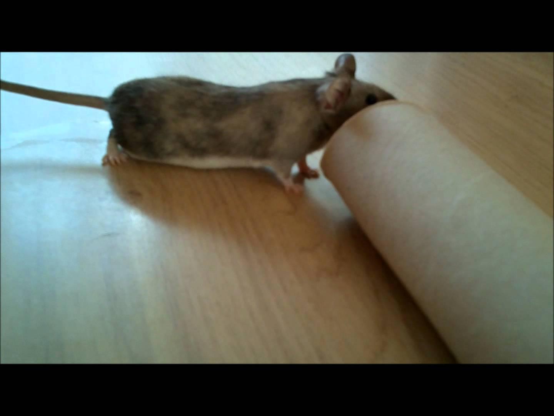 comment tuer une souris sans piege taupier sur la france. Black Bedroom Furniture Sets. Home Design Ideas