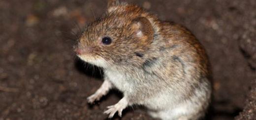 Pi ge rat fait maison taupier sur la france - Piege a souris fait maison ...