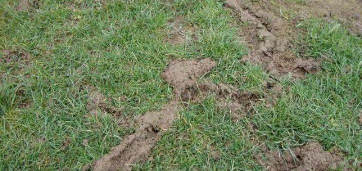 Comment liminer les rats dans un jardin taupier sur la for Eliminer les fourmis dans le jardin