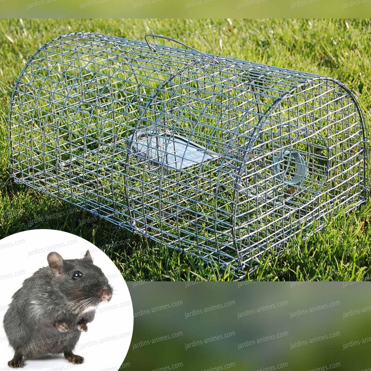 Cage pour attraper rat taupier sur la france - Faire fuir les rats ...