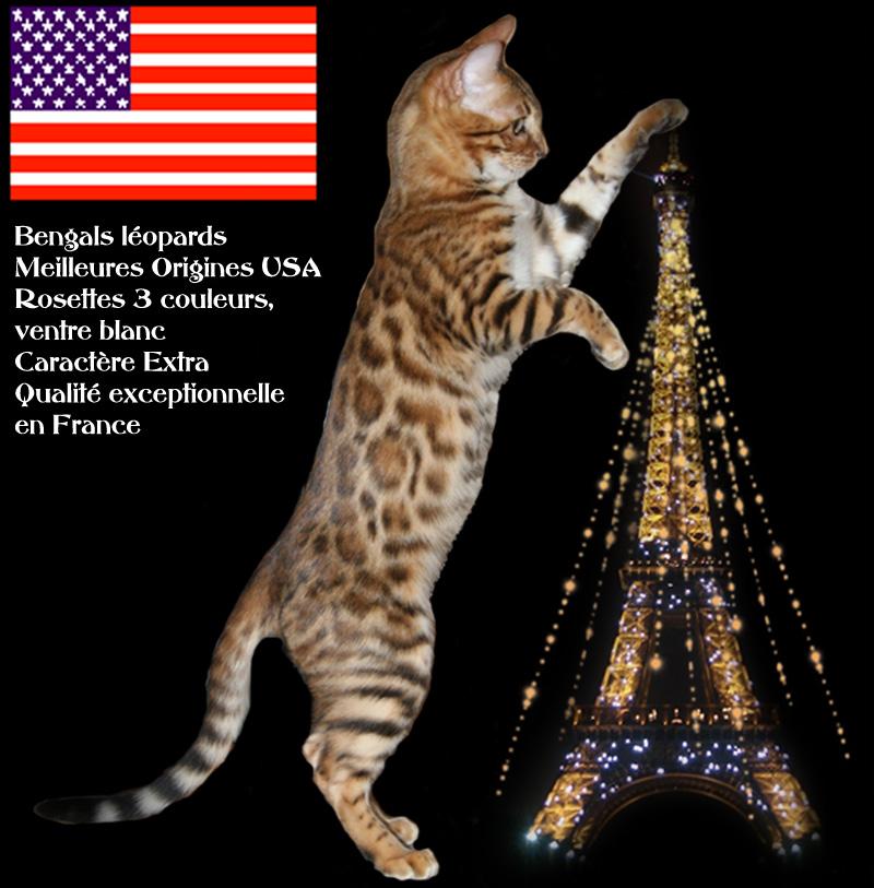 la france chat Voici le film d'animation réalisé par les gs/cp à partir de l'album : le voyage du chat à travers la france et génériquemp4 č.