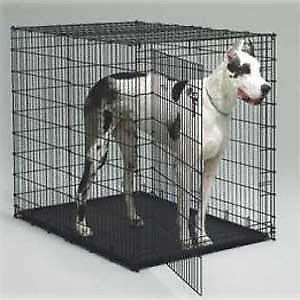 Grande Cage Pour Chien : grande cage pour chien taupier sur la france ~ Dode.kayakingforconservation.com Idées de Décoration
