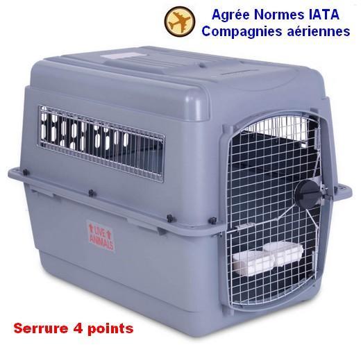 cage transport chien avion taupier sur la france. Black Bedroom Furniture Sets. Home Design Ideas