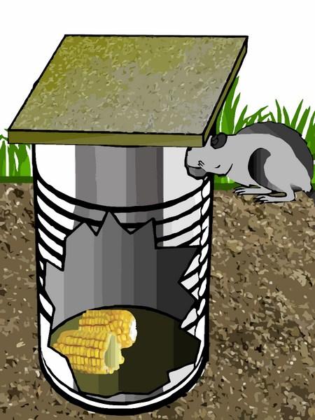Piege rat maison - taupier sur la France