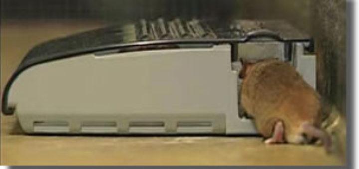 comment tuer un rat dans une maison taupier sur la france. Black Bedroom Furniture Sets. Home Design Ideas
