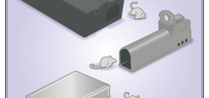 comment se d barrasser d une souris taupier sur la france. Black Bedroom Furniture Sets. Home Design Ideas