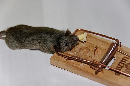 Pi ges rats astuces taupier sur la france - Piege a souris fait maison ...