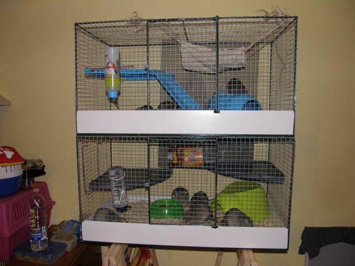 rat dans la maison que faire taupier sur la france. Black Bedroom Furniture Sets. Home Design Ideas