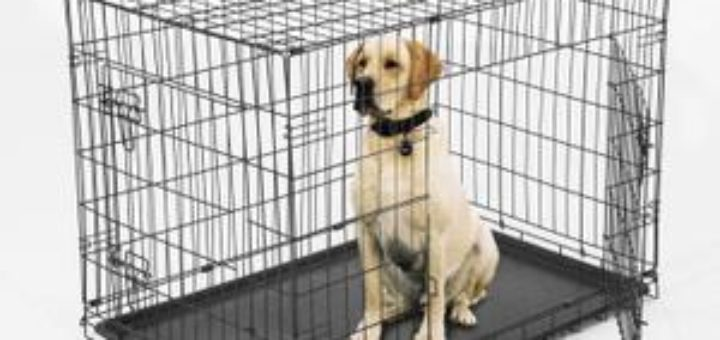 cage de transport pour grand chien pas cher taupier sur. Black Bedroom Furniture Sets. Home Design Ideas