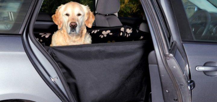 accessoire auto pour chien taupier sur la france. Black Bedroom Furniture Sets. Home Design Ideas